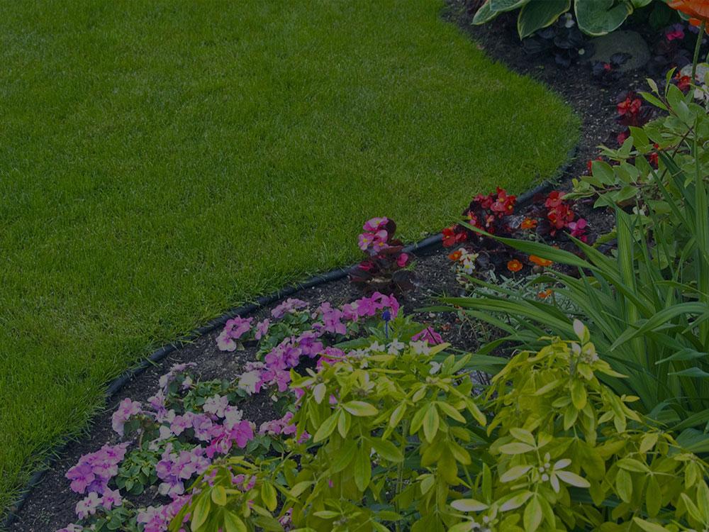 Bushland Garden Design