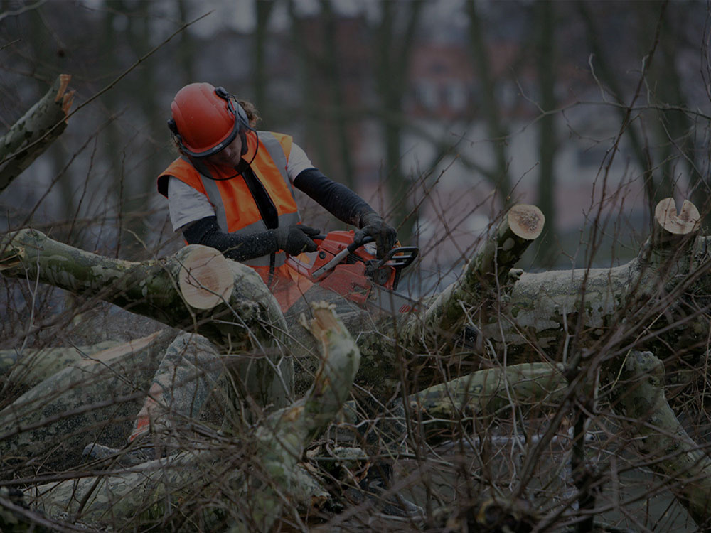 Bushland Tree Removal